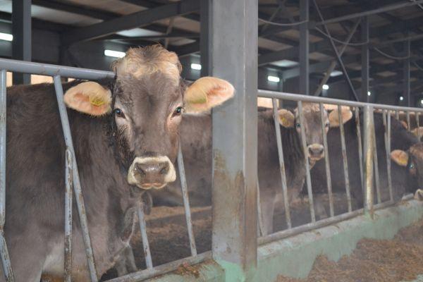 ВНижегородской области запустили новый животноводческий комплекс