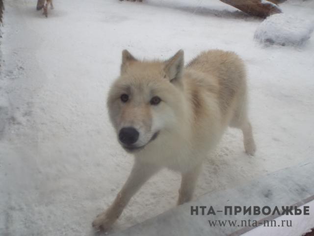 ВНижегородской области пересчитают всех диких животных