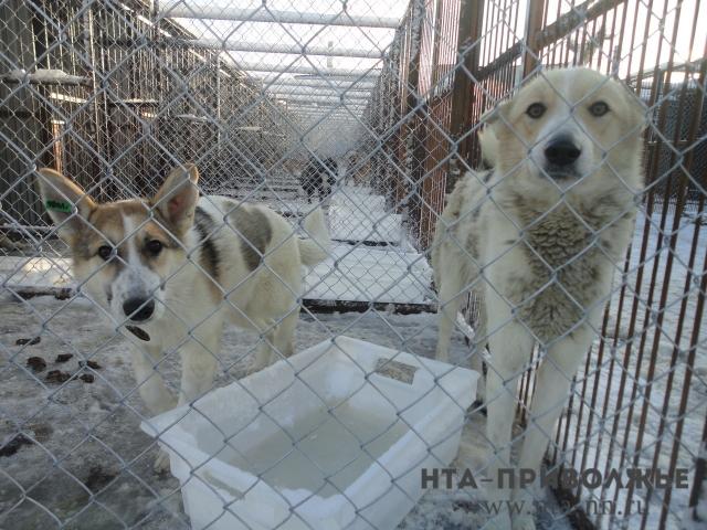 Аферисты ввиде зоозащитников одурачили нижегородцев на252 тысячи руб.