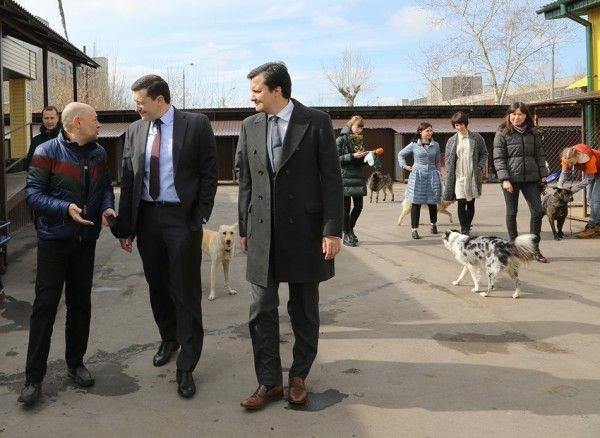 Нижегородские власти предлагают возвращать бездомных собак наулицу