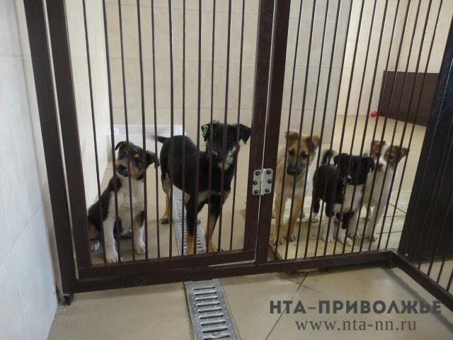 Приют для бездомных животных откроется 20декабря вНижнем Новгороде