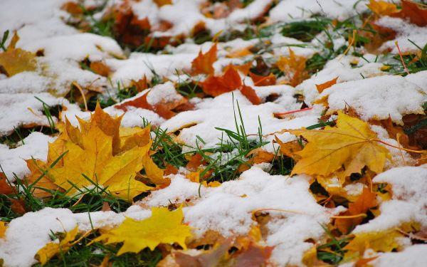 Впраздничную пятницу вКалуге предполагается снег сдождем