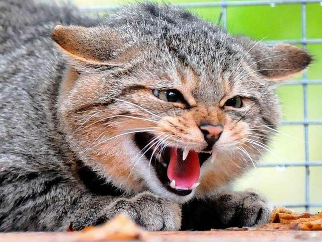 Бешенный кот покусал маленького ребенка вНижегородской области
