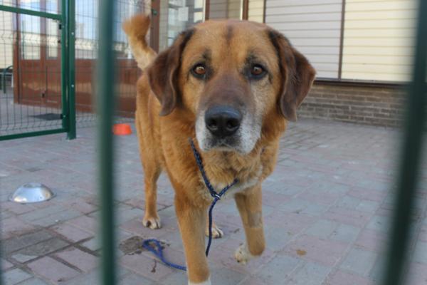 После истории с«собачьим концлагерем» вНижегородской области начнутся внеплановые проверки